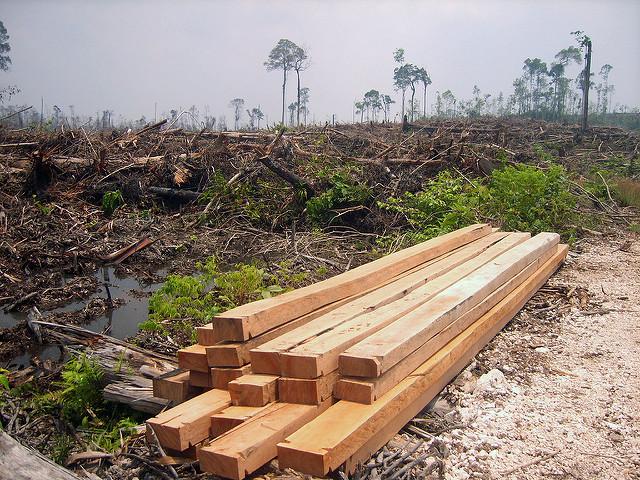 Illustrasjonsfoto regnskogsødeleggelser
