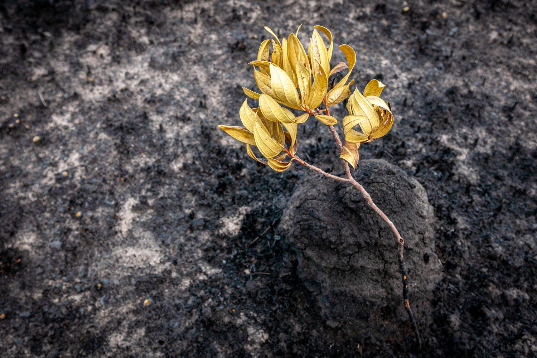 En kvist med blomster på ligger på brent skogbunn