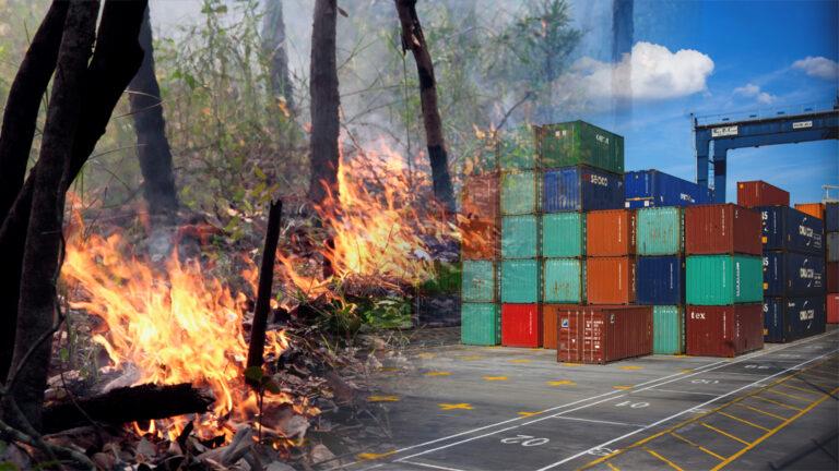 Brennende regnskog / containerterminal